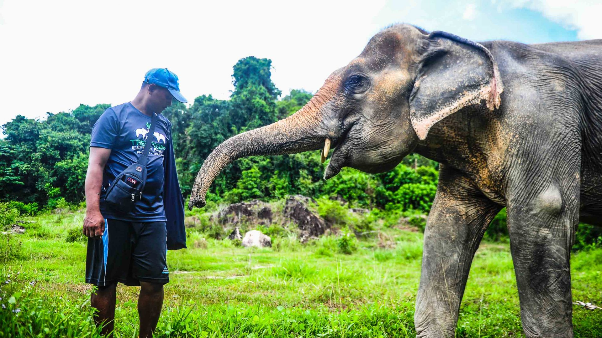 Thailand's elephant crisis: The sanctuaries offering hope and happiness