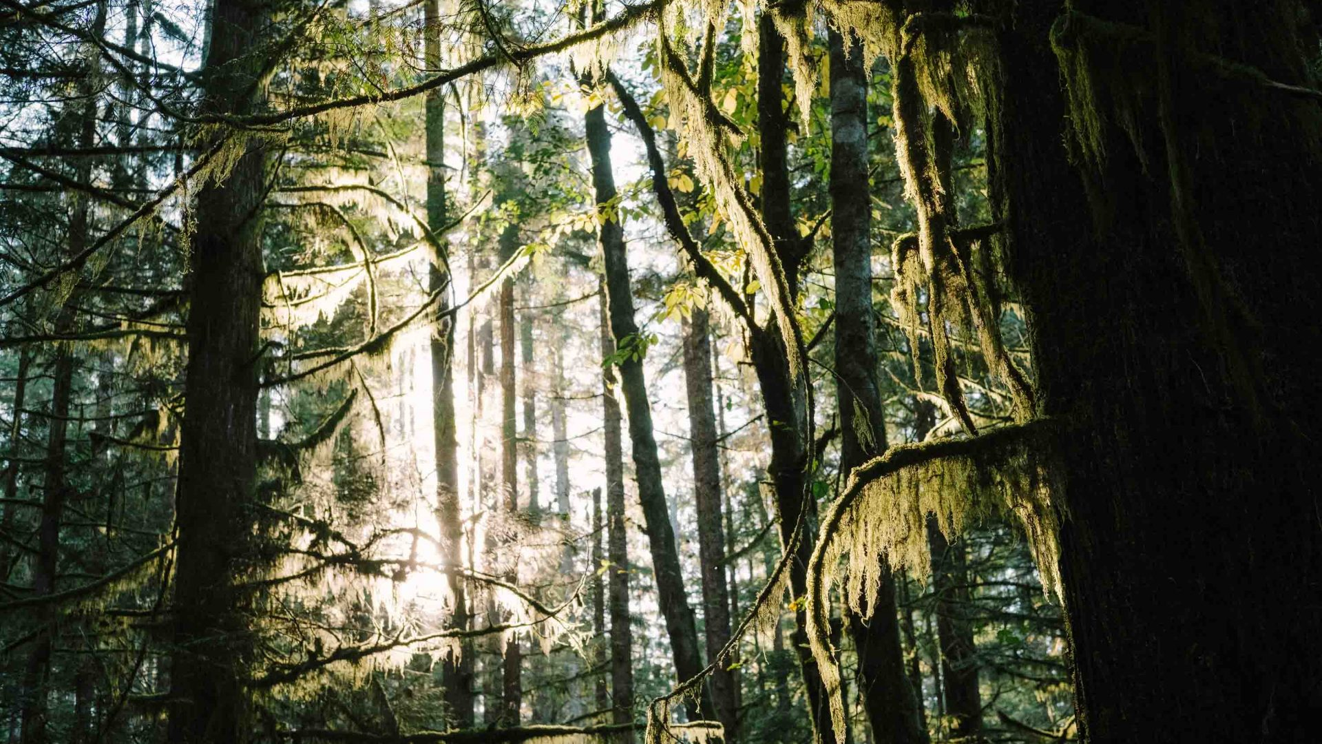 Dense green forest.