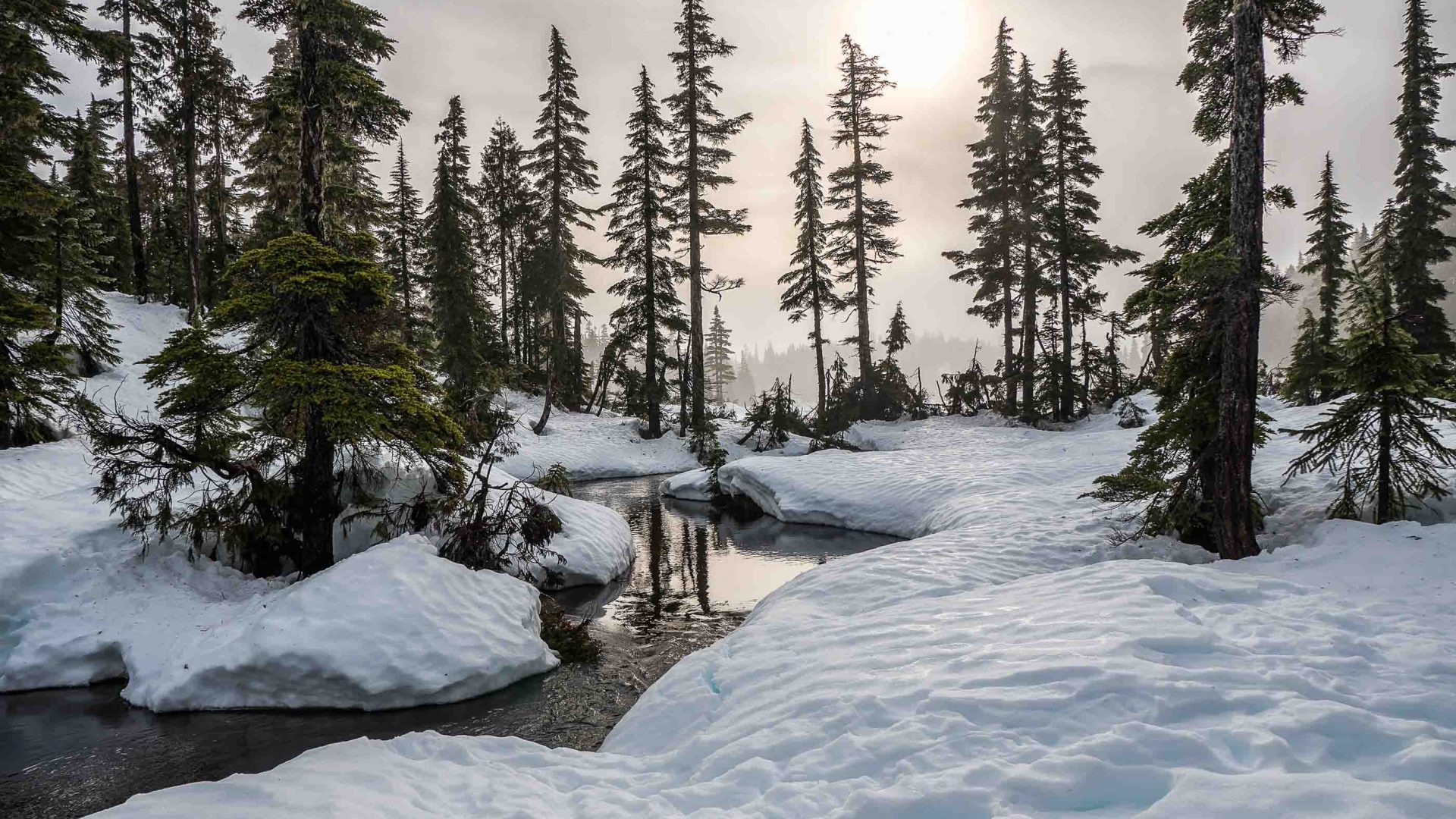 A small creek passes through snow and trees.